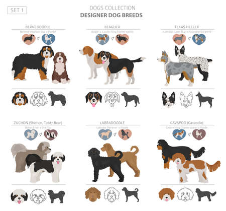 Designer dogs, crossbreed, hybrid mix pooches collection isolated on white. Flat style clipart set. Vector illustration Çizim