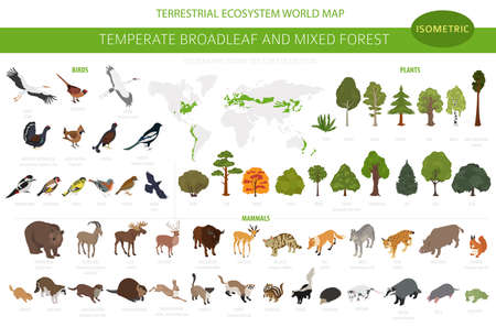 Temperate broadleaf forest and mixed forest biome. Terrestrial ecosystem world map. Animals, birds and plants set. 3d isometric graphic design. Vector illustration