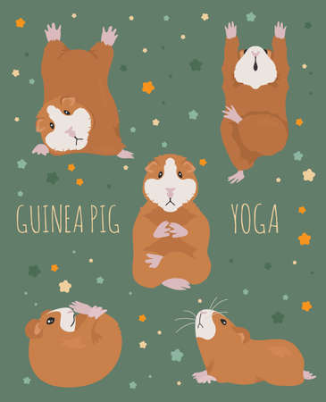 Guinea pig yoga poses and exercises. Cute cartoon clipart set. Vector illustration Illustration