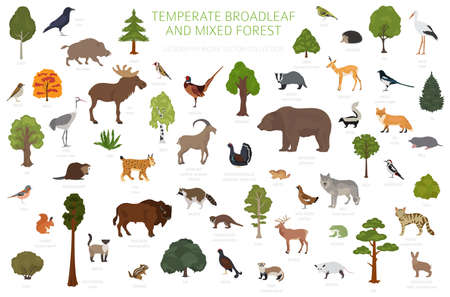 Temperate broadleaf forest and mixed forest biome. Terrestrial ecosystem world map. Animals, birds and plants graphic design. Vector illustration Stock Illustratie
