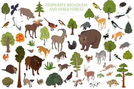 Bioma de bosque templado latifoliado y bosque mixto. Mapa mundial del ecosistema terrestre. Conjunto de animales, pájaros y plantas. Diseño gráfico isométrico 3d. Ilustración vectorial