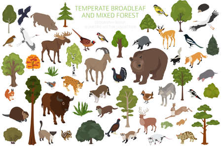 Temperate broadleaf forest and mixed forest biome. Terrestrial ecosystem world map. Animals, birds and plants set. 3d isometric graphic design. Vector illustration Illustration