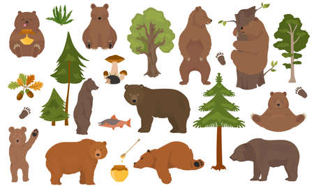 All bear species in one set. Bears in forest collection. Vector illustration Иллюстрация