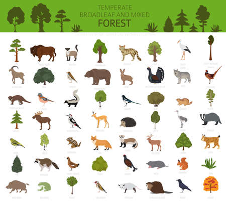Temperate broadleaf forest and mixed forest biome. Terrestrial ecosystem world map. Animals, birds and plants graphic design. Vector illustration Ilustração