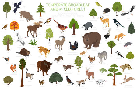 Temperate broadleaf forest and mixed forest biome. Terrestrial ecosystem world map. Animals, birds and plants set. 3d isometric graphic design. Vector illustration Ilustração