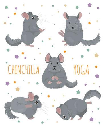 Chinchilla yoga poses and exercises. Cute cartoon clipart set. Vector illustration