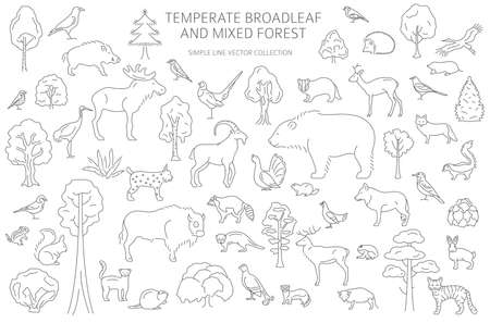 Temperate broadleaf forest and mixed forest biome. Terrestrial ecosystem world map. Animals, birds and plants set. Simple outline graphic design. Vector illustration