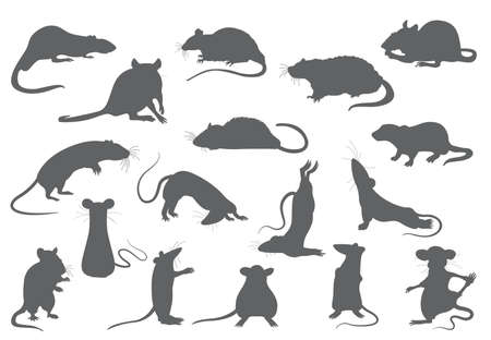 Different rats collection. Rat poses and exercises. Cute cartoon clipart set. Vector illustration