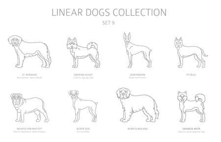 Collection de chiens de ligne simple isolée sur blanc. Races de chiens. Ensemble de cliparts de style plat. Illustration vectorielle