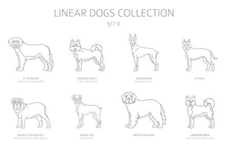 Simple line dogs collection isolated on white. Dog breeds. Flat style clipart set. Vector illustration Banque d'images - 132443567