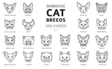 Domestic cat breeds and hybrids linear portraits collection isolated on white. Simple line cat`s head style set. Vector illustration