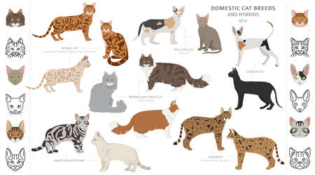Domestic cat breeds and hybrids collection isolated on white. Flat style set. Different color and country of origin. Vector illustration Stock Vector - 132242733