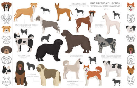 Working, service and watching dogs collection isolated on white. Flat style. Different color and country of origin. Vector illustration Illustration