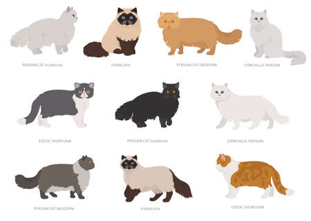 Persian longhaired type cats. Domestic cat breeds and hybrids collection isolated on white. Flat style set. Vector illustration