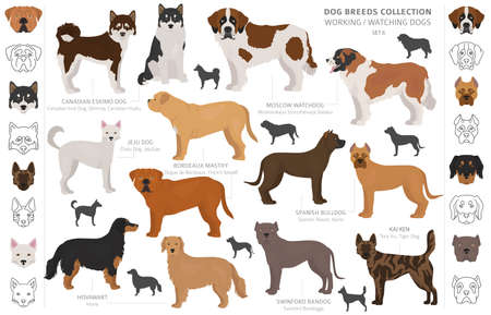 Working, service and watching dogs collection isolated on white. Flat style. Different color and country of origin. Vector illustration