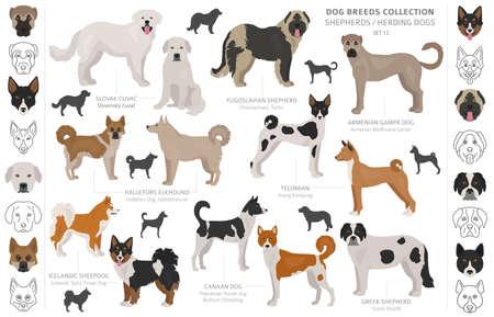 Collection de chiens de berger et de berger isolée sur blanc. Style plat. Couleur et pays d'origine différents. Illustration vectorielle Vecteurs