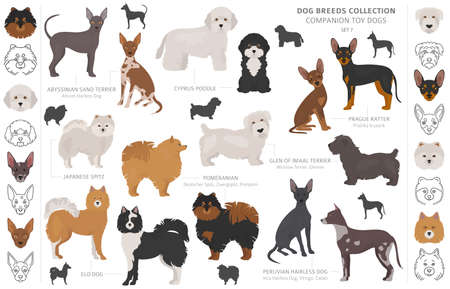 Companion and miniature toy dogs collection isolated on white. Flat style. Different color and country of origin. Vector illustration Vetores
