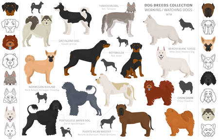 Working, service and watching dogs collection isolated on white. Flat style. Different color and country of origin. Vector illustration Иллюстрация