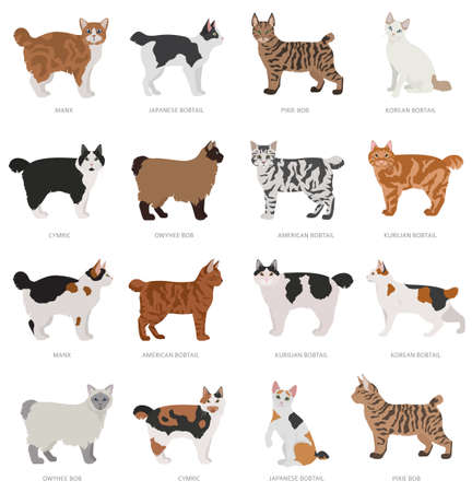 Short tail type bobcats. Domestic cat breeds and hybrids collection isolated on white. Flat style set. Vector illustration