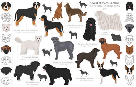 Colección de perros de pastor y pastoreo aislado en blanco. Estilo plano. Diferente color y país de origen. Ilustración vectorial