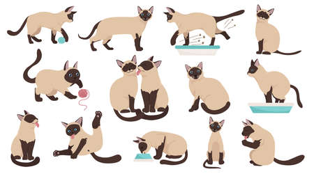 Cartoon cat characters collection. Different cat`s poses, yoga and emotions set. Flat color simple style design. Siamese colorpoint cats. Vector illustration