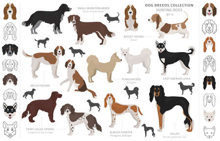 Hunting dogs collection isolated on white clipart. Flat style. Different color, portraits and silhouettes. Vector illustration Ilustração