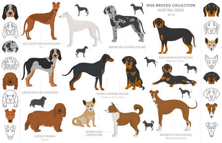 Collezione di cani da caccia isolata su clipart bianco. Stile piatto. Diversi colori, ritratti e sagome. Illustrazione vettoriale