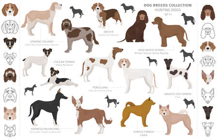 Hunting dogs collection isolated on white clipart. Flat style. Different color, portraits and silhouettes. Vector illustration Illustration