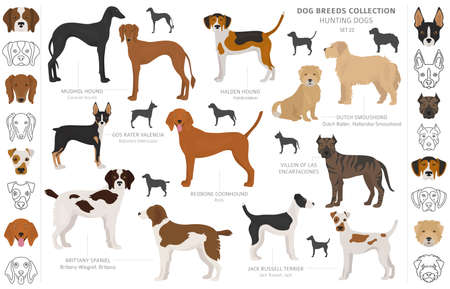 Hunting dogs collection isolated on white clipart. Flat style. Different color, portraits and silhouettes. Vector illustration Иллюстрация