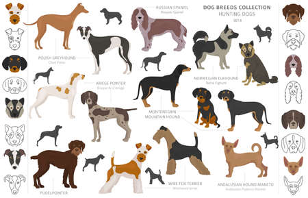 Hunting dogs collection isolated on white clipart. Flat style. Different color, portraits and silhouettes. Vector illustration Stock Illustratie