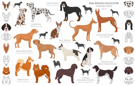 Hunting dogs collection isolated on white clipart. Flat style. Different color, portraits and silhouettes. Vector illustration  イラスト・ベクター素材