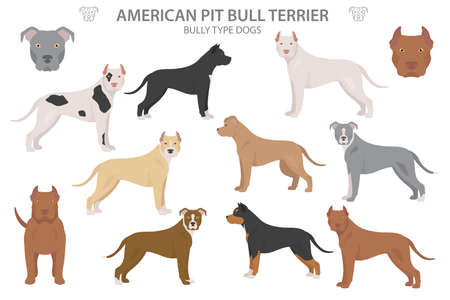 Pit bull type dogs. American pit bull terrier. Different variaties of coat color bully dogs set.  Vector illustration