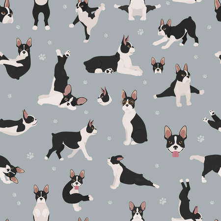 Boston terrier seamless pattern. Dog healthy silhouette and yoga poses background. Vector illustration Vector Illustration
