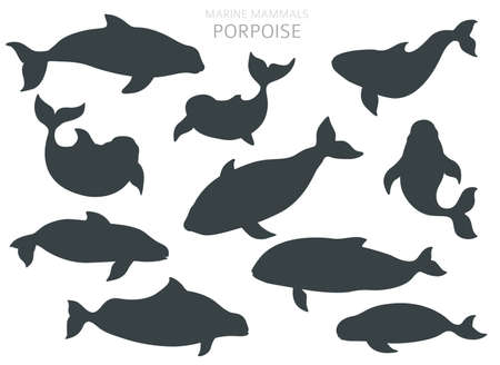 Marine mammals collection. Different porpoises set. Cartoon flat style design. Vector illustration