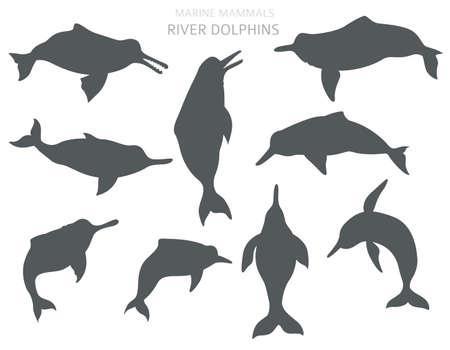 River dolphins set. Marine mammals collection. Cartoon flat style design. Vector illustration 일러스트