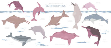 River dolphins set. Marine mammals collection. Cartoon flat style design. Vector illustration 向量圖像