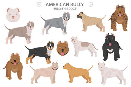 Pit bull type dogs. American bully. Different variaties of coat color bully dogs set.  Vector illustration