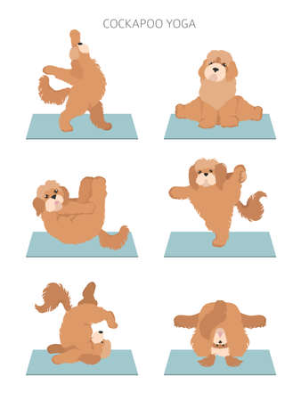 Yoga dogs poses and exercises poster design. Cockapoo clipart. Vector illustration