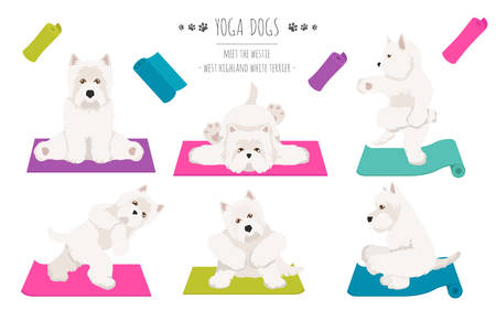 Yoga dogs poses and exercises poster design. West Highland White Terrier clipart. Vector illustration Illustration