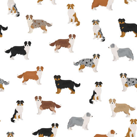 Australian shepherd dog seamless pattern. Different variations of coat color set. Vector illustration