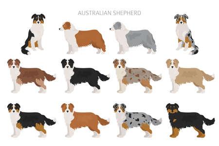 Australian shepherd dog. Different variations of coat color set.  Vector illustration