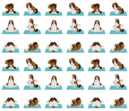 Yoga dogs poses and exercises poster design. Shih tzu seamless pattern. Vector illustration