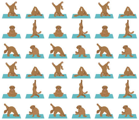 Yoga dogs poses and exercises poster design. Labradoodle seamless pattern. Vector illustration