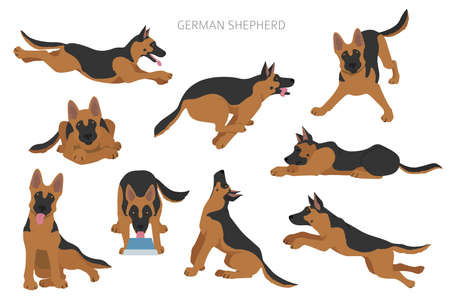 German shepherd dogs in different poses. Shepherd characters set.  Vector illustration Vectores