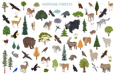Montane forest biome, natural region infographic. Isometric version. Terrestrial ecosystem world map. Animals, birds and vegetations ecosystem design set. Vector illustration Ilustração
