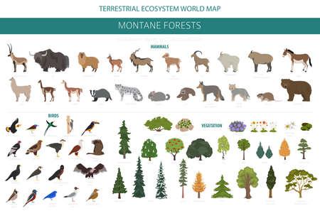 Montane forest biome, natural region infographic. Terrestrial ecosystem world map. Animals, birds and vegetations ecosystem design set. Vector illustration