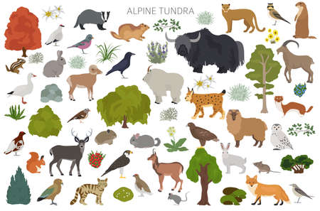 Apine tundra biome, natural region infographic. Terrestrial ecosystem world map. Animals, birds and plants design set. Vector illustration Stock Illustratie