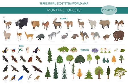 Montane forest biome, natural region infographic. Isometric version. Terrestrial ecosystem world map. Animals, birds and vegetations ecosystem design set. Vector illustration  イラスト・ベクター素材