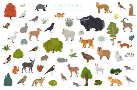 Apine tundra biome, natural region infographic. Terrestrial ecosystem world map. Animals, birds and plants design set. Vector illustration Ilustração
