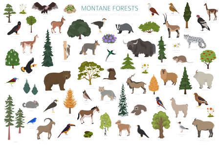 Montane forest biome, natural region infographic. Terrestrial ecosystem world map. Animals, birds and vegetations ecosystem design set. Vector illustration